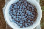 blueberrie detox