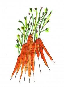 carrots healthy carbs